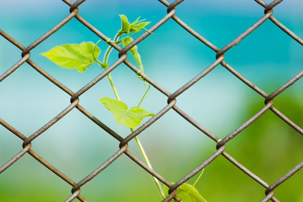 chain link fence little tree